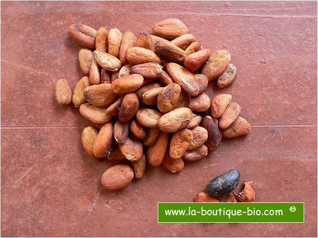 <b>FEVES DE CACAO CRUES ENTIERES</b><br>Theobroma cacao - NON FERMENTEES<br>ORGANIC CACAO BEANS WITH SKIN<BR>OFF - CULTURE BIO<br>100 grs
