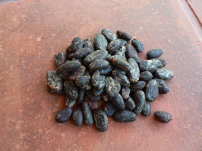 <b>RAW CACAO BEANS PEELED</b><br>Theobroma cacao - UNFERMENTED<BR>ORGANIC CACAO BEANS WITHOUT SKIN<br>OFF - ORGANIC CULTIVATION<br>100 grs